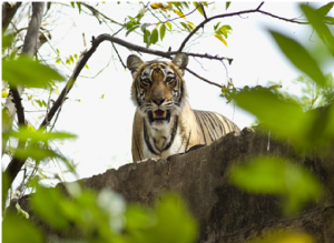 2. Wildlife Excursion In Aman-I-Khas, India