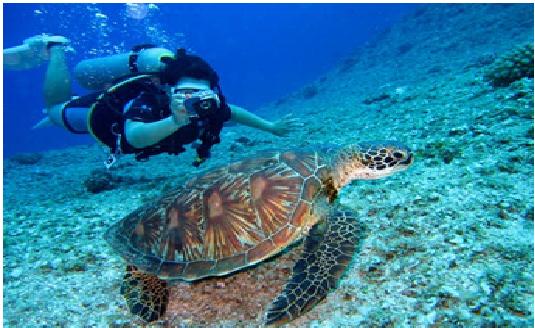 1.Try Diving At Padang Bai