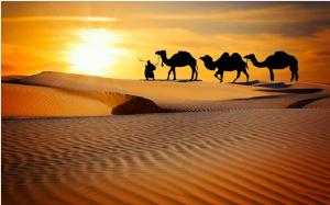 Book Desert Safari Sharjah Tour